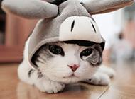安逸可爱的小小萌猫壁纸