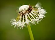 植物花卉的空间背景图片素材