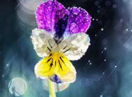 雨中浪漫唯美鲜花梦幻美景
