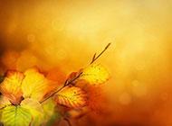 秋天的树叶唯美图片素材