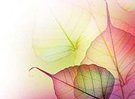 美丽幻彩的透明树叶图片素材