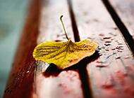 一片叶子唯美简约背景图片