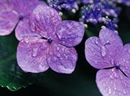 花卉壁纸唯美护眼高清大图