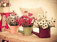 浪漫唯美盆栽艺术花卉背景美图