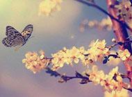 韩国浪漫唯美樱花图片素材