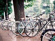 单车浪漫温馨带风景的图片
