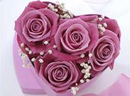 心形礼盒里的紫玫瑰图片