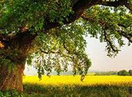一棵茂盛的大树摄影图片