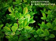 绿色植物意境图片