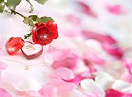魅力绽放的红玫瑰与戒指图片