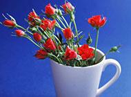 创意插花设计作品欣赏