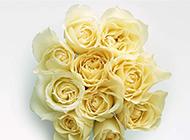 眉目娇羞的黄玫瑰花瓣图片