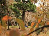 秋天参天大树秀丽风景美图图片
