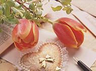 信封上的康乃馨高清艺术图片