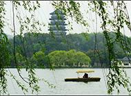 河岸飘摇的青钱柳树图片