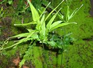 绿色野生植物原创摄影