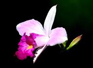 紫色的花图片微距摄影
