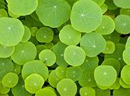 绿色植物背景素材欣赏