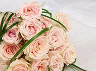 高清的粉玫瑰唯美图片素材