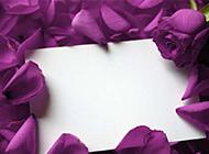 散落的唯美紫色玫瑰图片