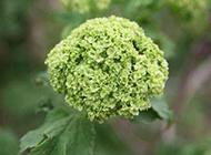 绿色植物花卉图片清新雅致