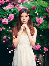 小清新蔷薇花