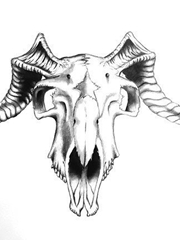 帅气的山羊颅骨纹身图片手稿