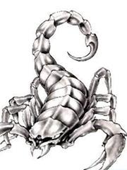 黑白蝎子纹身手稿图片