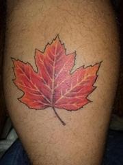 小腿上漂亮的红枫叶纹身图片