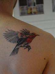 男子右后肩背上飞翔的知更鸟纹身图片