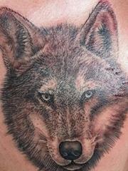 帅气的黑灰色写实风格狼头纹身图片