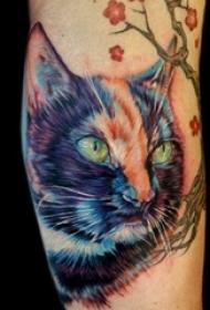 彩色的各种风格猫纹身动物图案纹身