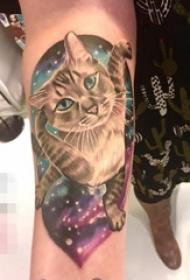 女性手臂上漂亮的彩色写实宠物猫纹身图片
