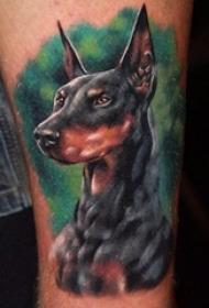 一组生动且活泼的杜宾犬宠物狗纹身动物纹身图案大全