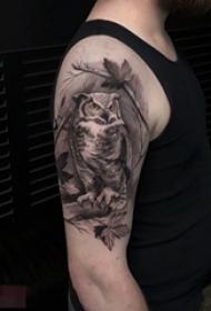男生手臂上黑灰素描创意霸气猫头鹰纹身图片