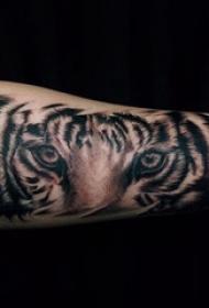 男生手臂上黑灰点刺技巧动物老虎纹身图片