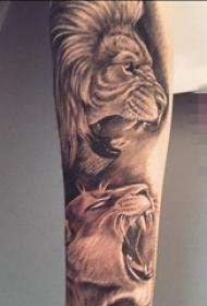 男生手臂上黑棕色素描雄狮纹身图片