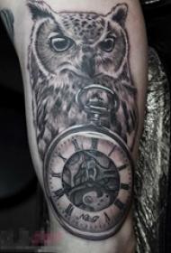 男生手臂上黑灰素描点刺技巧创意动物猫头鹰和怀表纹身图片