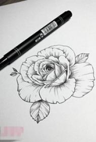 唯美的黑色简单线条植物素材玫瑰纹身手稿