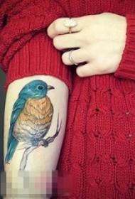女生手臂上彩绘水彩创意可爱小鸟纹身图片