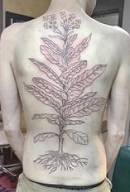 男生后背上黑色抽象线条植物叶子和花朵纹身图片