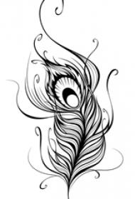 黑色线条文艺精美孔雀羽毛唯美纹身手稿