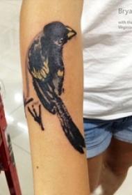 男生手臂上黑灰素描创意可爱小鸟纹身图片