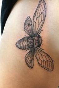 百乐动物纹身 女生侧腰上黑色的昆虫纹身图片