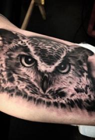 猫头鹰纹身 男生手臂上黑色的猫头鹰纹身图片