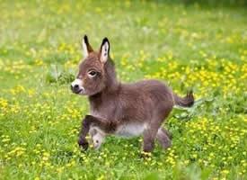 """""""我有一只小毛驴 从来也不骑 """"特别可爱的驴宝宝"""