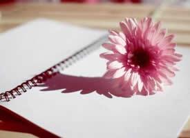 空间素材:带花朵小清新背景
