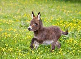一波萌萌哒的小驴·原来小驴是这么阔爱的