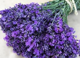 一组紫色简单好看的薰衣草花束图片欣赏