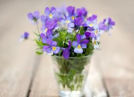 一组有意境感的紫色花花图片欣赏
